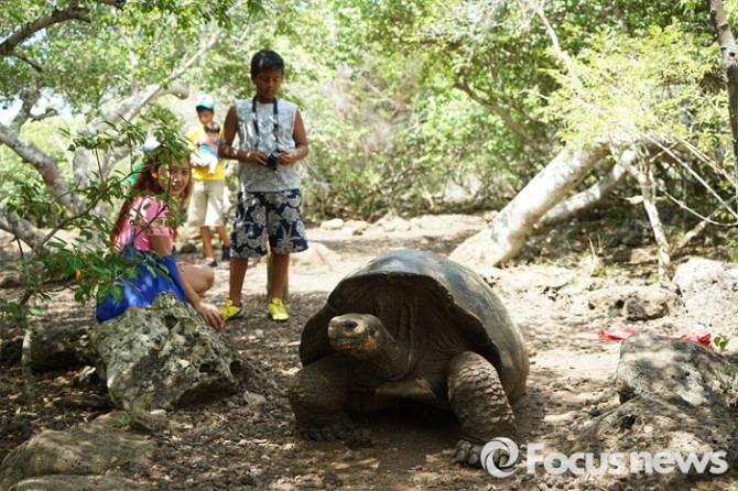 갈라파고스에만 서식하는 자이언트거북은 코끼리거북이라고도 하며 지구상의 거북이 종류중 가장 크다. 갈라파고스란 말 자체가 스페인어로 거북이란 뜻이다.  - .<사진제공=전수경> 2016.03.15 포커스포토 photo@focus.kr 제공
